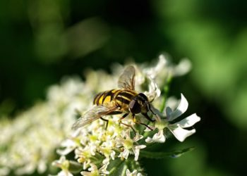 Bug Resistant